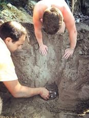 Danny and Nikos relocating a sea turtle nest   | check it out at wildlifesense.com