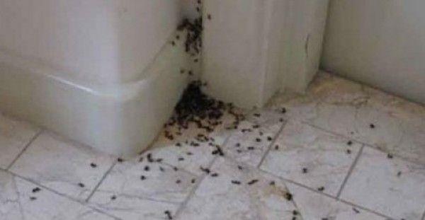 ΤΕΛΟΣ στα μυρμήγκια! Δείτε πως θα ξεφορτωθείτε τα μυρμήγκια από το σπίτι σας !