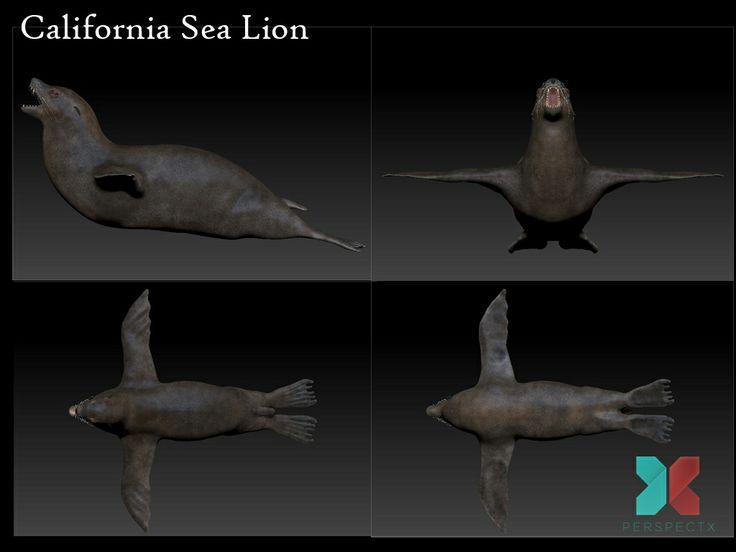 Recent work...a California Sea Lion