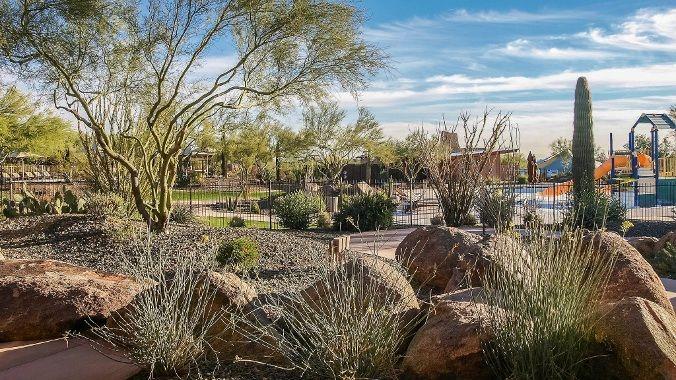 17 Best Images About Phoenix Az On Pinterest Cactus