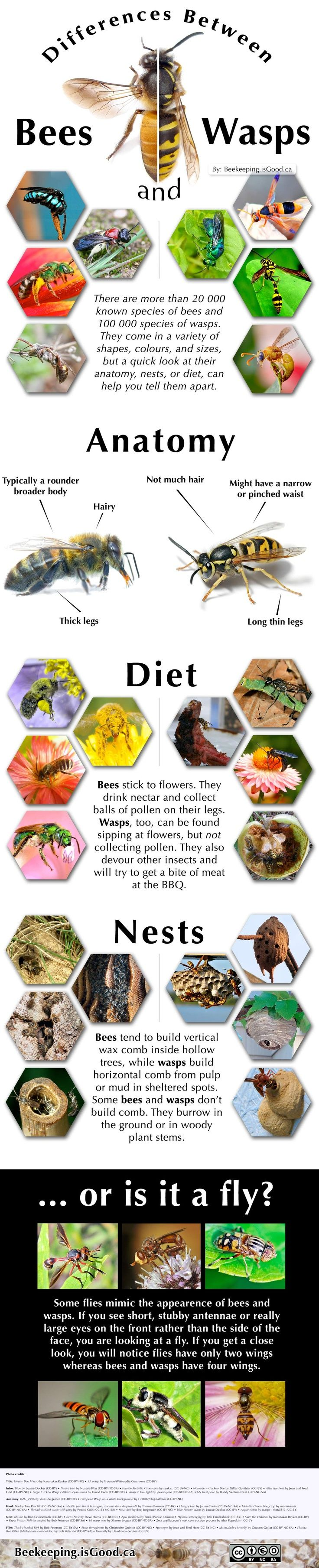 Great graphic on differences between bees and wasps ...