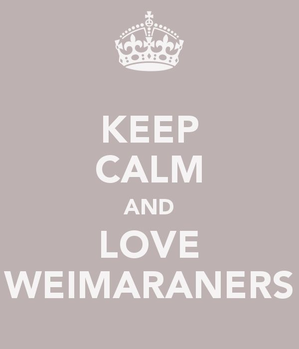 Keep Calm and Love Weimaraners - Weimaraner