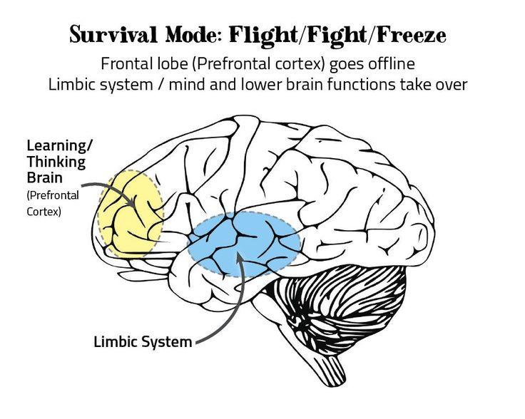Improve brain power and memory