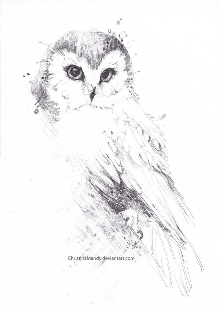 Owl... by ChristinaMandy