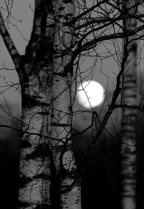 ☾ Midnight Dreams ☽  dreamy & dramatic black and white photography - moon through the trees