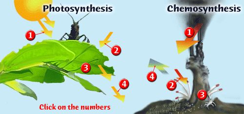 compare photosynthesis and chemosynthesis Get an answer for 'what is the difference between photosynthesis and respiration' and find homework help for other biochemistry questions at enotes.