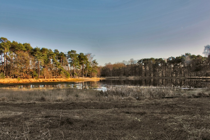 Haaksbergen, Twente, the Netherlands. The more at Buurse at the Buurserzand. (by: harry eppink)