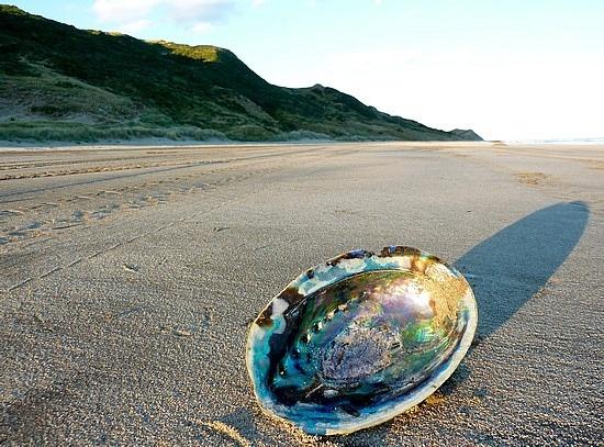 paua shell (on Pourerere beach NZ)