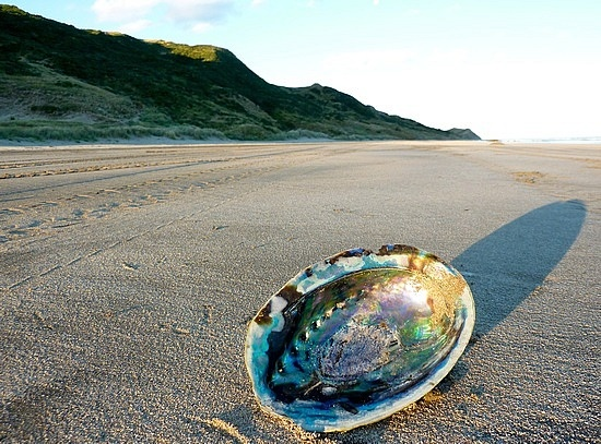 #Paua Shell (Pourerere beach #NZ)