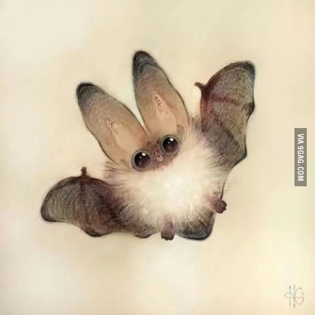 I am the night- aww this is a cute looking bat xo