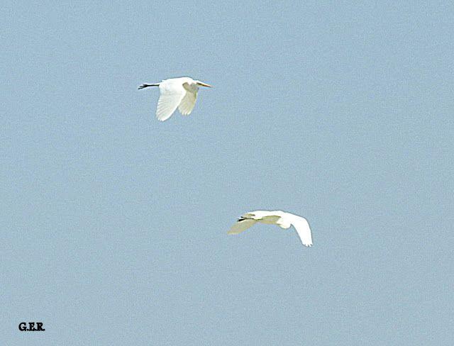 Aves del Golfo San Jorge: Nueva visita Bahía Solano 29-10-2016