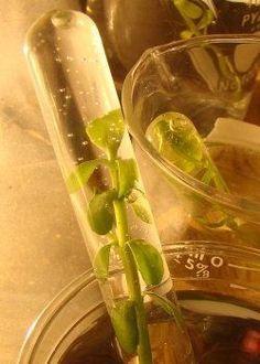 GCSE Photosynthesis - ProProfs Quiz