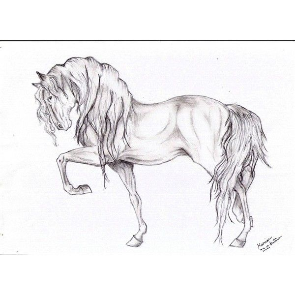 horse drawing ❤ liked on Polyvore