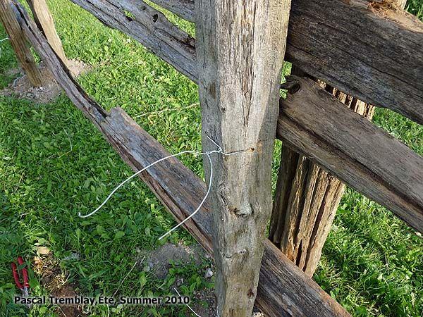 Attacher les perches en cèdre aux piquets - Installation d'une Clôture de perches en cèdre. Voir : http://www.france-jardinage.com/cloture/cloture-perches-3.html