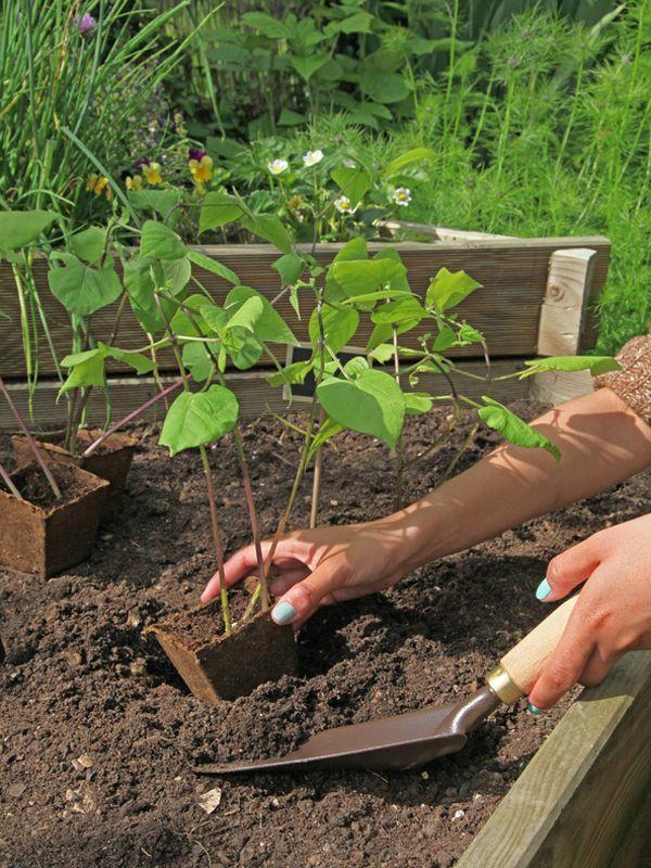 17 best pflanzen images on pinterest gardening decks and garden plants. Black Bedroom Furniture Sets. Home Design Ideas