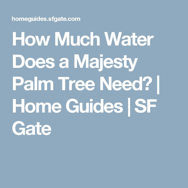 How Much Water Does a Majesty Palm Tree Need? | Home Guides | SF Gate