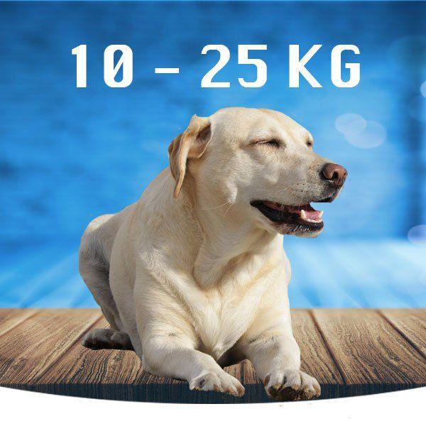 Mellem (10-25kg)