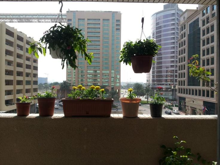 9 best Balcony garden images on Pinterest | Balcony ...