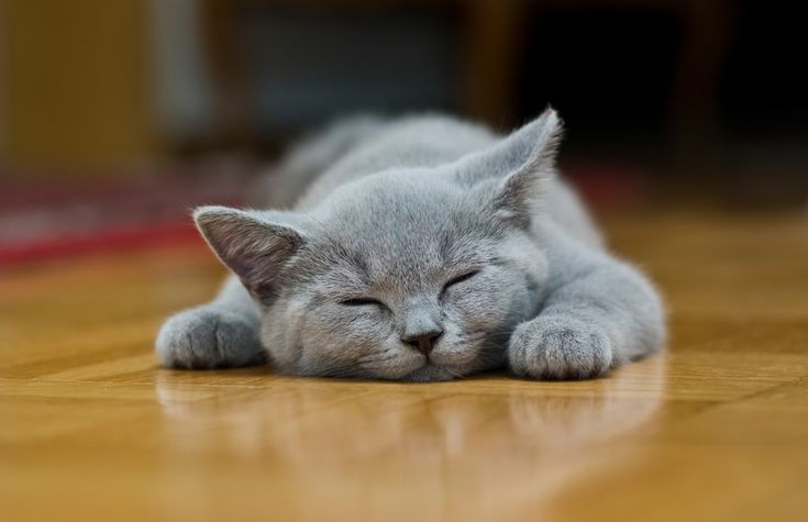 I've always wanted a gray kitten.