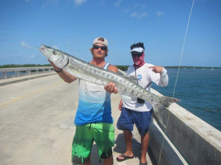 40lb cuda landed off no name key bridge on a live for Florida keys bridge fishing