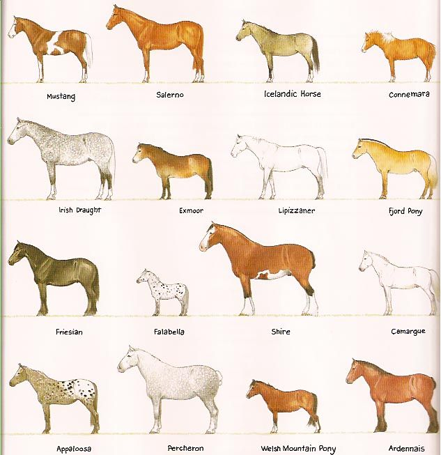 Different horse breeds. I see the Fjord pony!!! :) <3