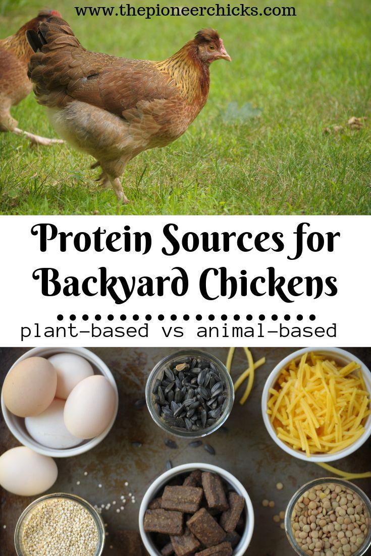 Proteinquellen für Hühner