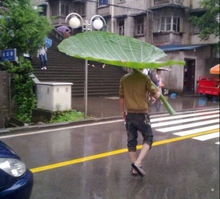 Nature really does provide for everything: Like A Boss, Elephants Ears, Funnies Pics, Mothers Nature, Totoro, A Bugs Life, Leaves, Hilary Photo, Leaf Umbrellas