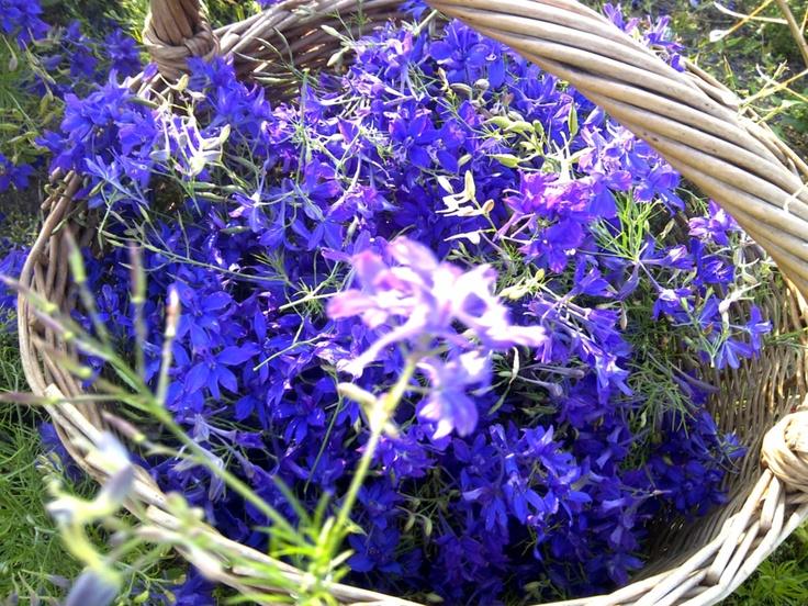 Great purple