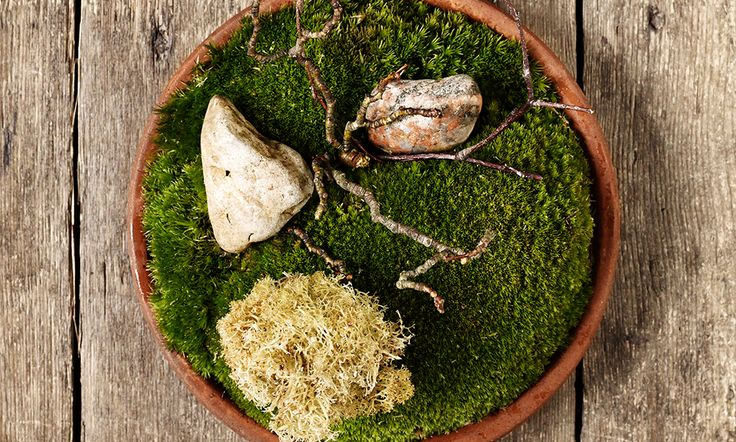Fried Finnish reindeer moss with pulverized cep mushrooms by chef René Redzepi. © Mikkel Heriba. - See more at: http://theartofplating.com/gallery/?home=1&link=post-376#gallery40331