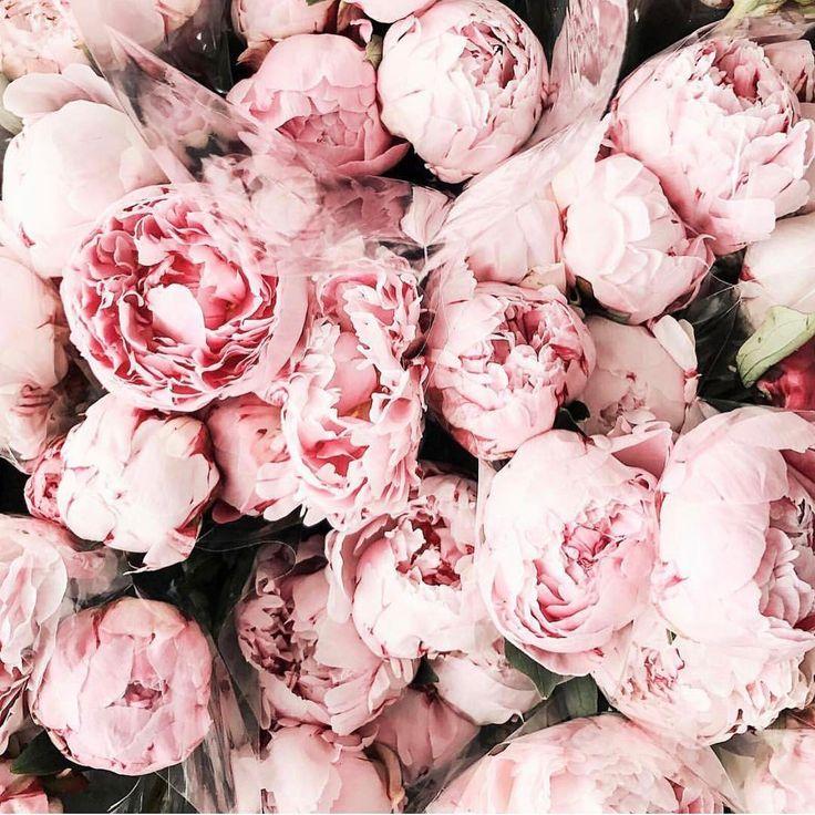 Pink peonies please