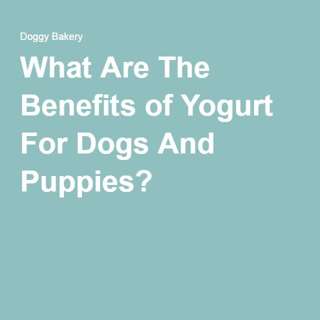 What Are The Benefits of Yogurt For Dogs And Puppies?