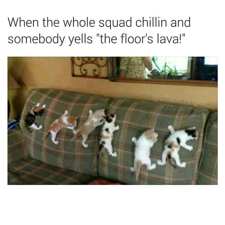 Image Result For The Floor Is Lava Cute Pinterest