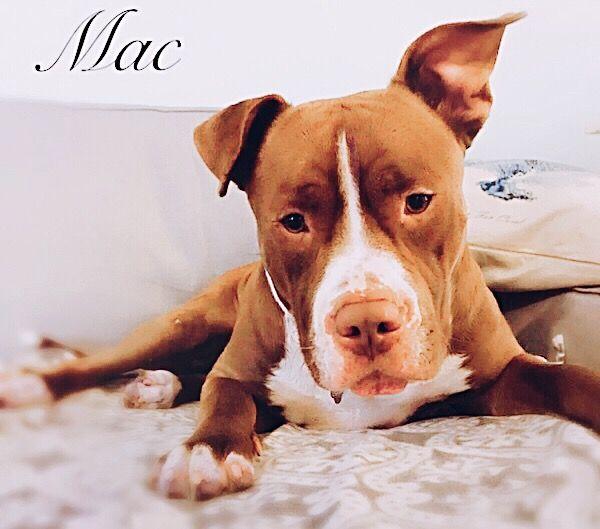 Bulldog dog for Adoption in Fort Myers, FL. ADN-772955 on PuppyFinder.com Gender: Female. Age: