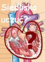 Całkowicie niezaprzeczalny symbol walentynek - serce. Skąd się wziął i jak ma się do rzeczywistości - poczytaj w naszym portalu
