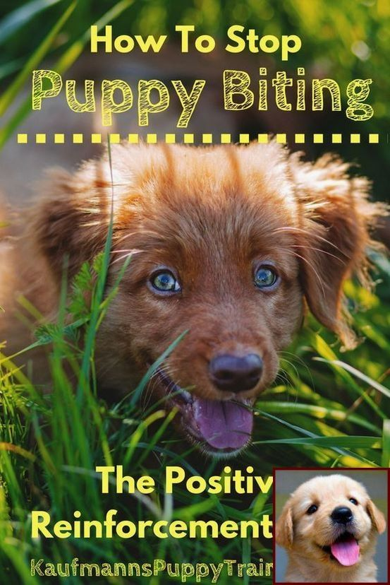 Potty Training A Puppy With And Clicker Training Your Dogs