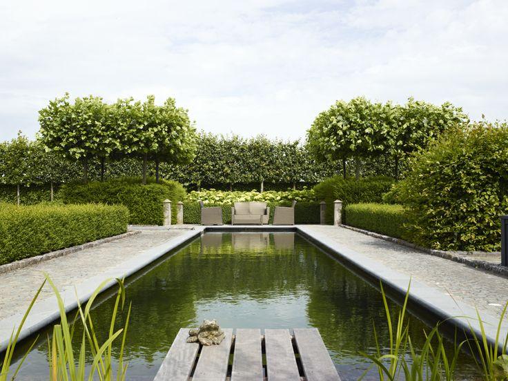 Rechthoekige vijver met natuurlijke planten waterzuivering for Kostprijs zwembad aanleggen
