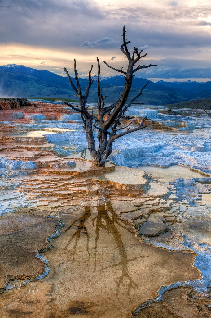 Canary Spring Reflection, Upper terraces of Mammoth Hot Springs, Yellowstone National Park, Wyoming