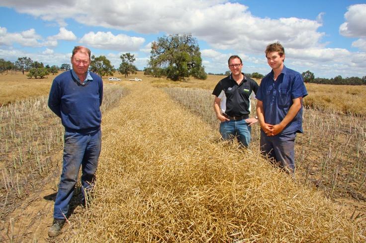 IH50RR growers, John and Jono Glasfurd, with Bayer's David Peake.