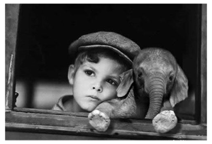just a boy and an elephant chillin'