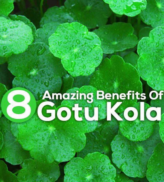 The uses of the gotu kola plant