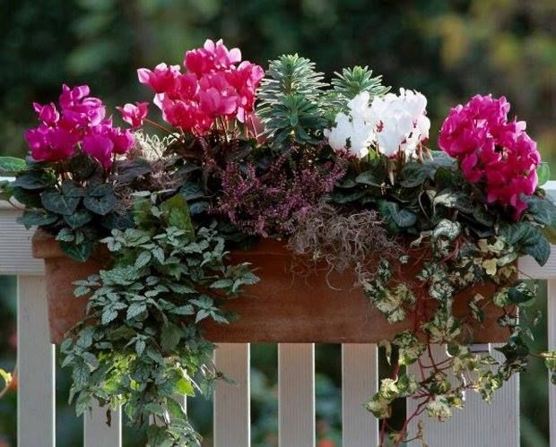 Pin By Karocold On Rosliny W Donicach Floral Wreath Plants Floral