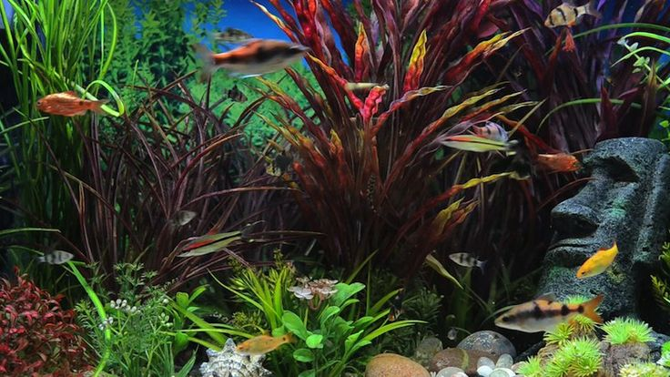 This colourful aquarium screensaver video is filmed in HD and looks great on all television screens. It comes with a fire computer screensaver so you can turn any screen into a fish tank. See the video clip at http://www.uscenes.com/video/amazon-aquarium/