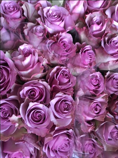 Rose - Nightingale. Sold in bunches of 20 stems from the Flowermonger the wholesale floral home delivery service.