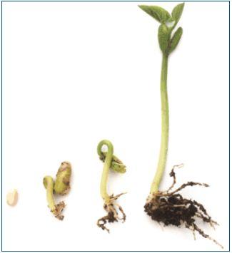 El periodo de descanso de la semilla antes de la germinación y los tipos de siembra   #Huerto urbano - Huerto ecológico ecoagricultor.com