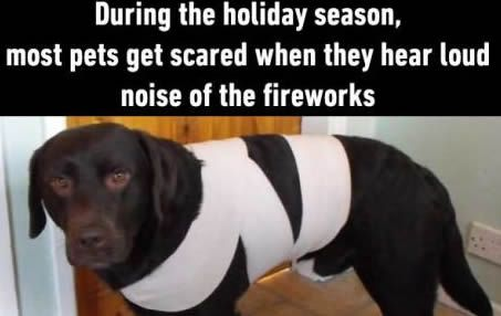This simple trick is to calm pets (dogs or cats) in some loud noise situation (like in New Year's fireworks, or in a thunder storm weather). Using a long fabric to half-wrap your dog or cat (following the instructions in the picture). In this way, your pets will feel safe and no more crazy actions during New Year's fireworks.