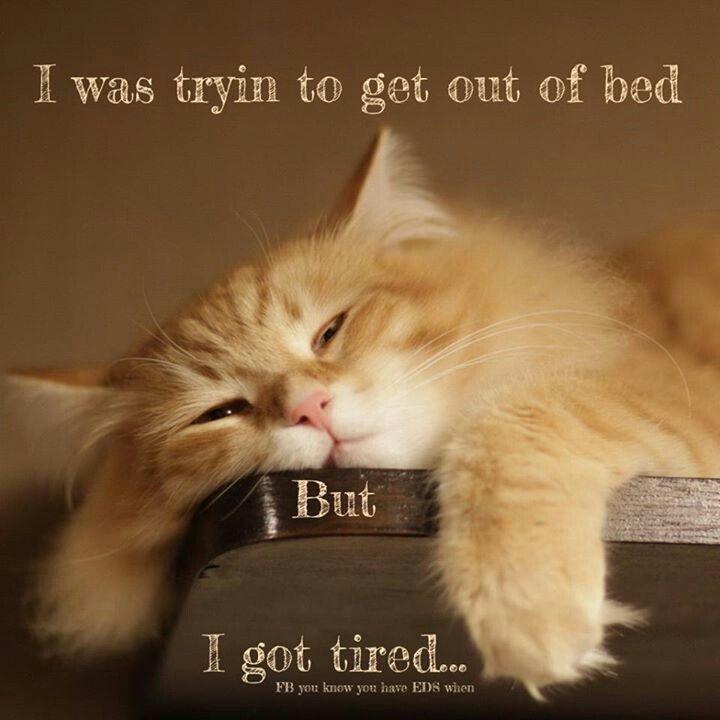 f0e90f7c3a71b54de5358eb87f457c65 endometriosis rheumatoid arthritis 4189 best struggles humor images on pinterest chronic pain,Chronic Illness Cat Meme