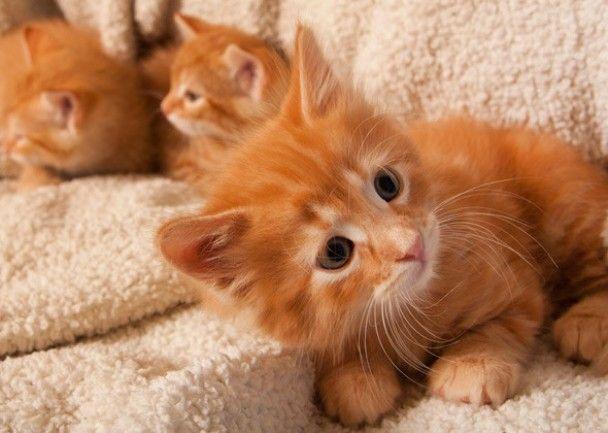 cute male kitten names
