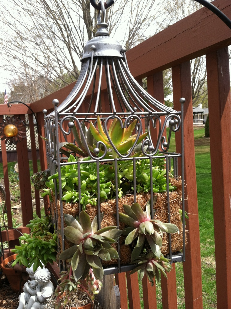 Old decorative bird cage spray painted and filled with succulents good way to use those
