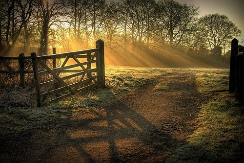 Soft golden rays of early morning sun