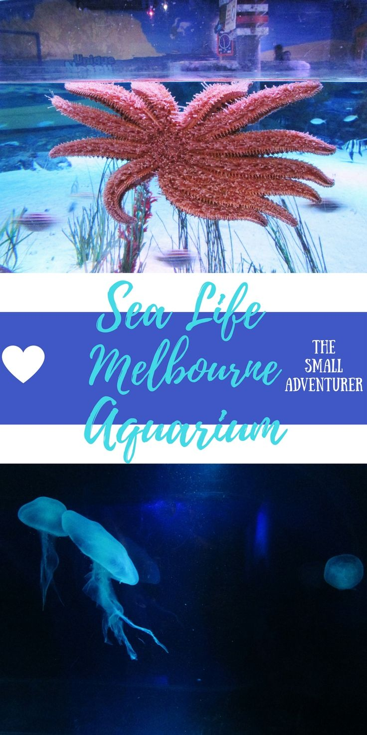 Sea Life Melbourne Aquarium || The Small Adventurer